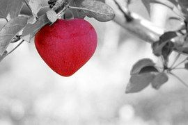 apple-love570965__180